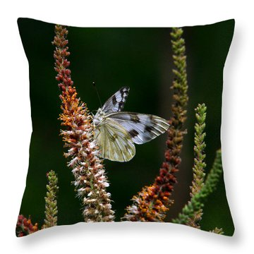 Checkered White On An Indigo Throw Pillow
