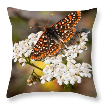 Throw Pillow featuring the photograph Checkerspot Butterfly On A Yarrow Blossom by Jeff Goulden