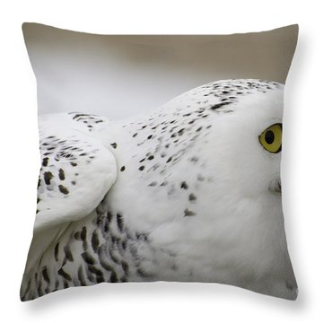 Cheeky Snow Owl Throw Pillow