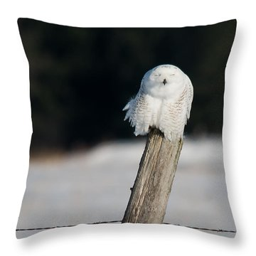 Cheeky Snowy Throw Pillow by Cheryl Baxter