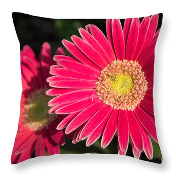Cheerfulness Throw Pillow by Arlene Carmel
