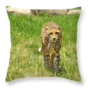 Cheetah Approaching Throw Pillow by CML Brown