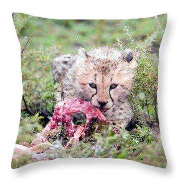 Cheetah Cub Acinonyx Jubatus Eating Throw Pillow