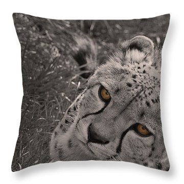 Cheetah Eyes Throw Pillow by Martin Newman