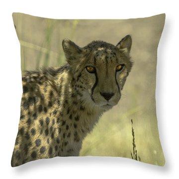 Cheetah Gaze Throw Pillow by LeeAnn McLaneGoetz McLaneGoetzStudioLLCcom