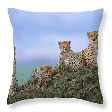 Cheetah Mother And Cubs Masai Mara Throw Pillow by Yva Momatiuk John Eastcott