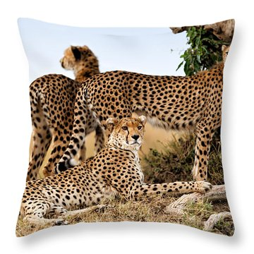 Cheetah Mother And Two Older Cubs In Masai Mara Throw Pillow by Maggy Meyer
