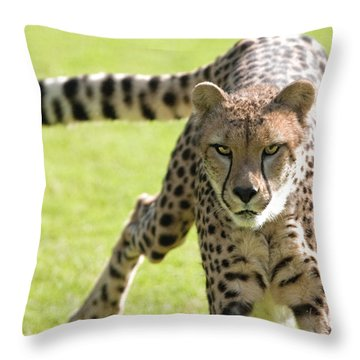 cheetah Running Portrait Throw Pillow