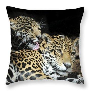 Jaguars Lounging And Licking Throw Pillow