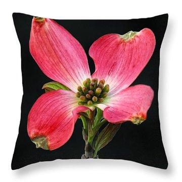 Cherokee Chief Dogwood Bloom Throw Pillow