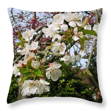 Cherry Blossom In The Spring Throw Pillow
