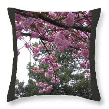Cherry Blossoms 1 Throw Pillow by David Trotter