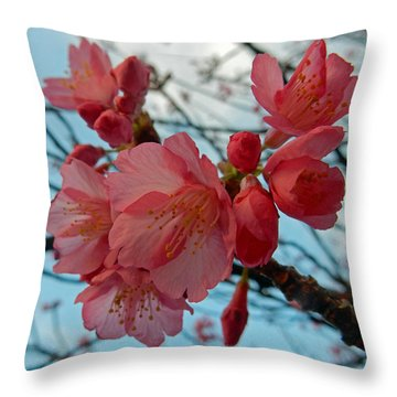 Cherry Blossoms Throw Pillow by Pamela Walton
