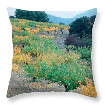 Cherry Trees In An Orchard Throw Pillow