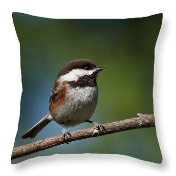 Chestnut Backed Chickadee Perched On A Branch Throw Pillow by Jeff Goulden