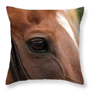 Chestnut Horse Eye Throw Pillow