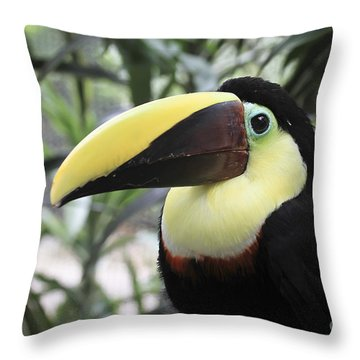 Chestnut-mandibled Toucan Throw Pillow by Teresa Zieba