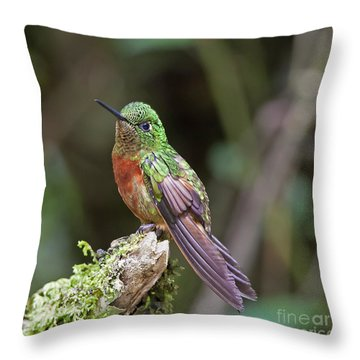Chestut-breasted Coronet Throw Pillow