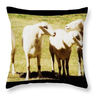 Cheviot Sheep Throw Pillow by Kathy Barney