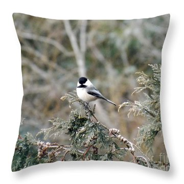Throw Pillow featuring the photograph Chickadee In Cedar by Brenda Brown
