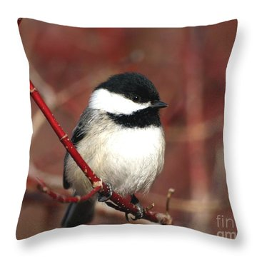 Chickadee Throw Pillow by Susan  Dimitrakopoulos