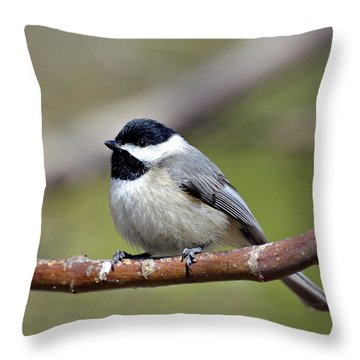 Chickadee Throw Pillow by Susan Leggett