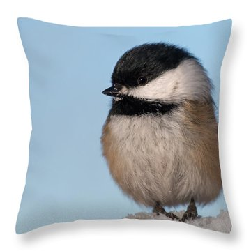 Chickadee Up Close Throw Pillow
