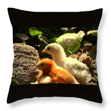 Throw Pillow featuring the photograph Cute Chicks by Salman Ravish