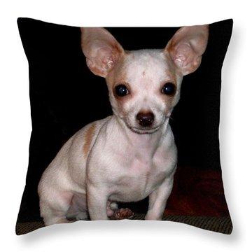 Chihuahua Puppy Throw Pillow by Maria Urso