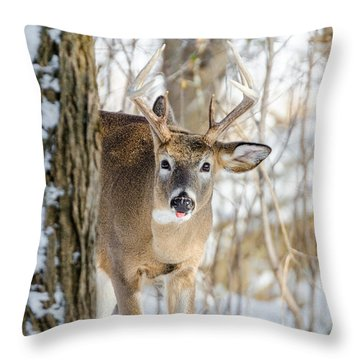 Childish Buck Throw Pillow