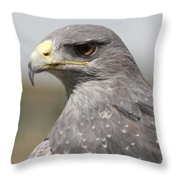 Chilean Eagle Throw Pillow