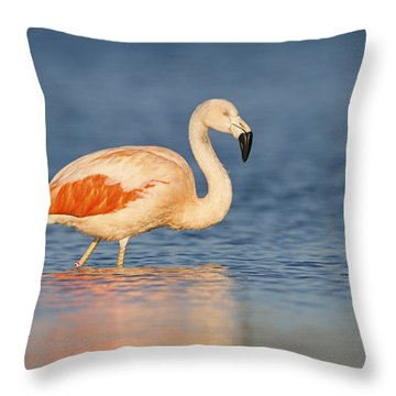 Chilean Flamingo Throw Pillow