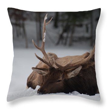 Throw Pillow featuring the photograph Chillin' by Bianca Nadeau