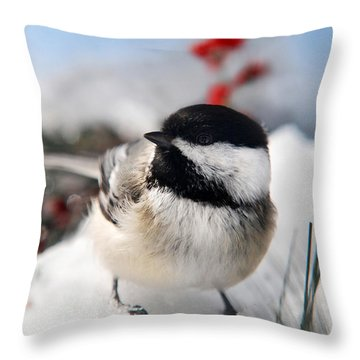 Chilly Chickadee Throw Pillow by Christina Rollo