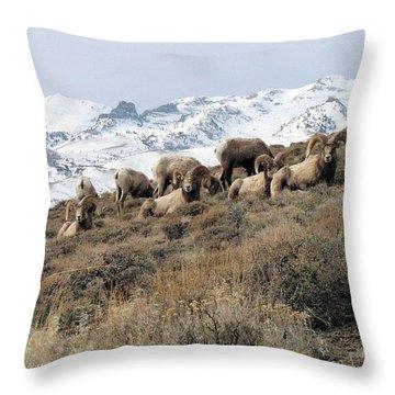 Chimney Rock Rams Throw Pillow