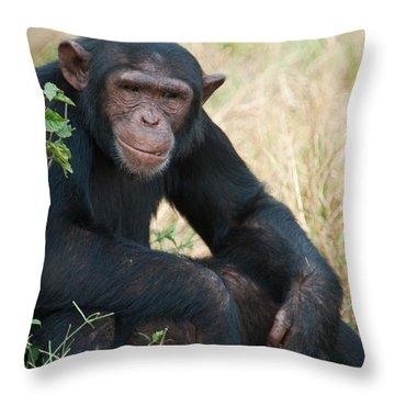 Chimpanzee Pan Troglodytes In A Forest Throw Pillow