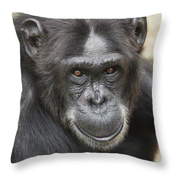 Chimpanzee Portrait Ol Pejeta Throw Pillow by Hiroya Minakuchi