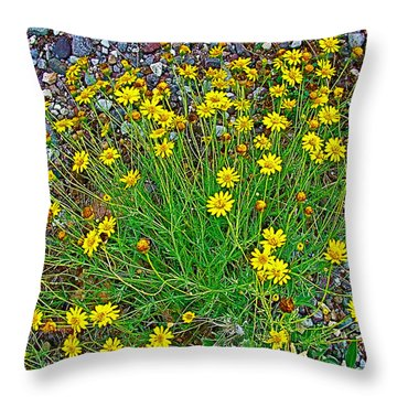 Chinchweed In Big Bend National Park-texas Throw Pillow