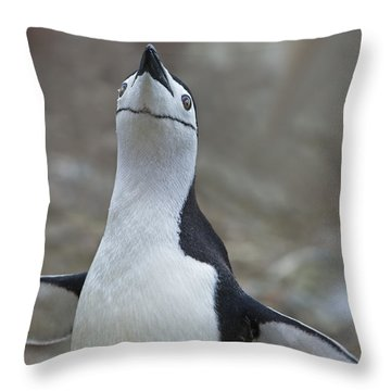 Chinstrap Madness... Throw Pillow by Nina Stavlund