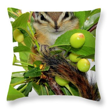 Throw Pillow featuring the photograph Chip Or Dale by Barbara Chichester