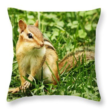 Throw Pillow featuring the photograph Chipmunk Delight by Al Fritz