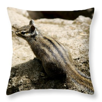 Chipmunk On A Rock Throw Pillow by Belinda Greb