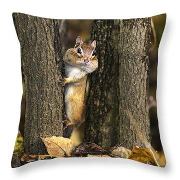 Chipmunk Peek A Boo Throw Pillow by Christina Rollo