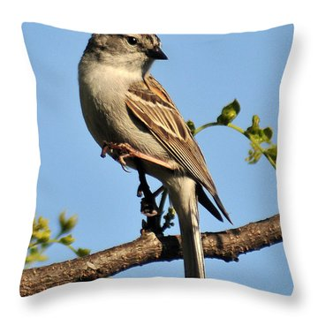 Chipping Sparrow 246 Throw Pillow