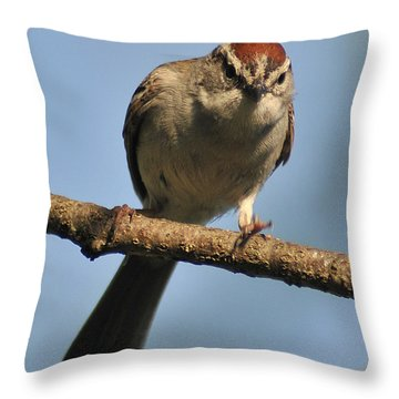 Chipping Sparrow 265 Throw Pillow