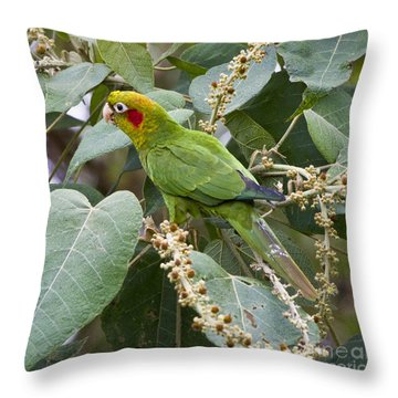 Chiriqui Conure 2 Throw Pillow by Heiko Koehrer-Wagner