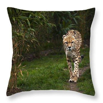 Chita Throw Pillow by Svetlana Sewell