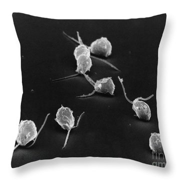 Chlamydomonas Throw Pillow by David M. Phillips