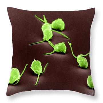 Chlamydomonas, Sem Throw Pillow by David M. Phillips
