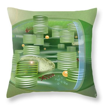 Chloroplast - Basis Of Life - Plant Cell Biology - Chloroplasts Anatomy - Chloroplasts Structure Throw Pillow